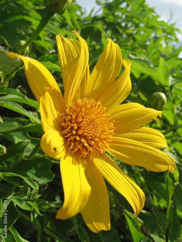 płatki słupek kwiat - powiększenie