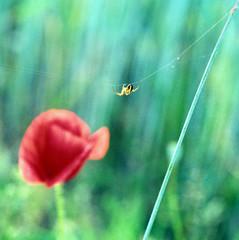 araignée sur fil