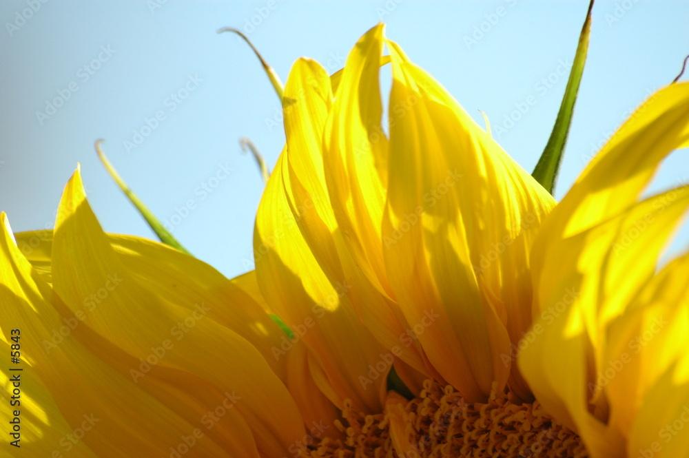 natura flora kwiat - powiększenie