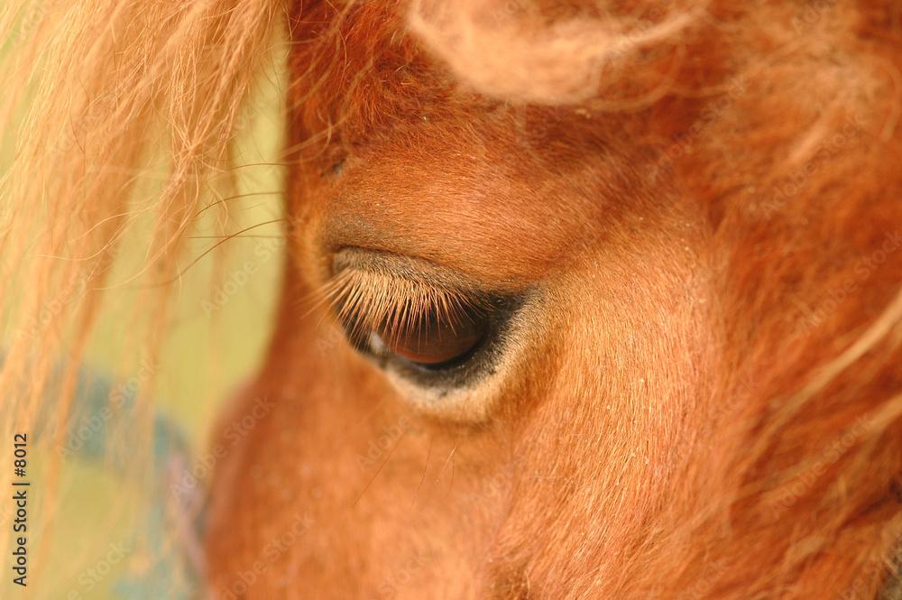 smutny smutek koń - powiększenie