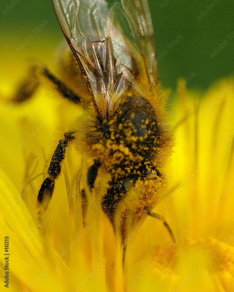 pyłek nektar kwiat - powiększenie