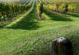 rangs de vigne poster