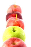 fresh green and red apples poster