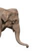 an elephant head isolated - 29409
