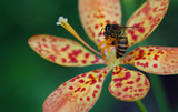 bee on orchid 2 poster