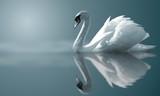 swan odbicia