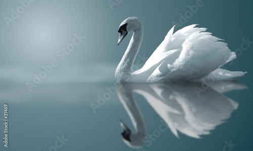 canvas print picture swan reflections