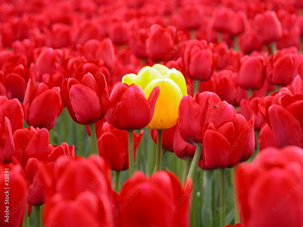 kwiat kwiat czerwony - powiększenie