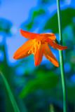 flower orange poster