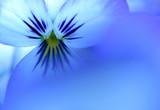 kind of blue poster