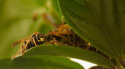 awake bee