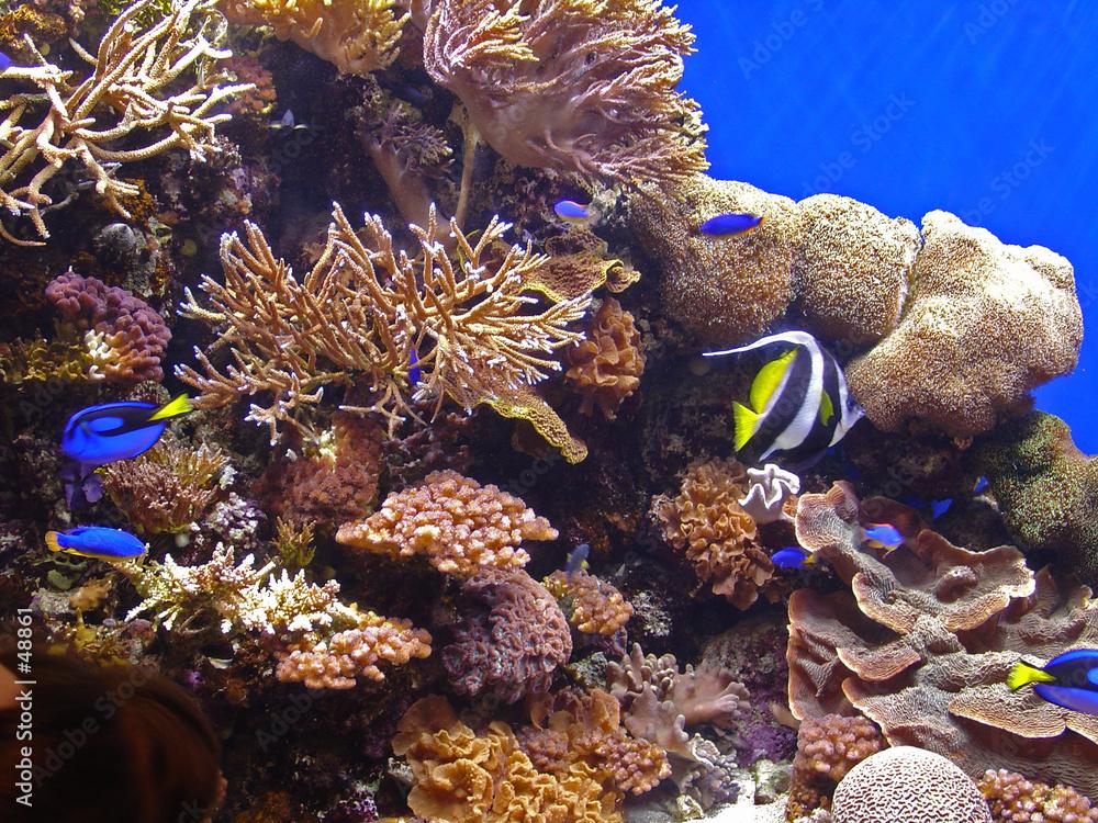 tropikalna ryba rafa koral - powiększenie