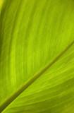 green texture poster