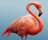 Fototapeta rose - ptak - Ptak