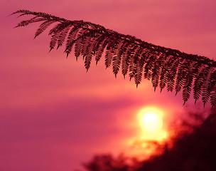 beverly hills sunrise