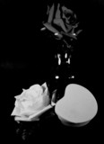 black and white roses. poster