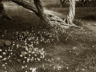 timeless spring meadow
