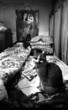 chat et vieille dame
