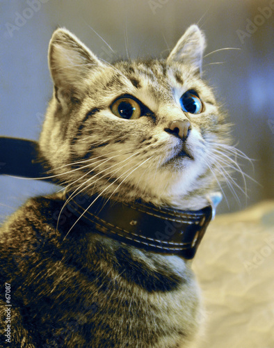 poster of freedom-loving cat
