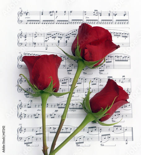 canvas print picture roses and music