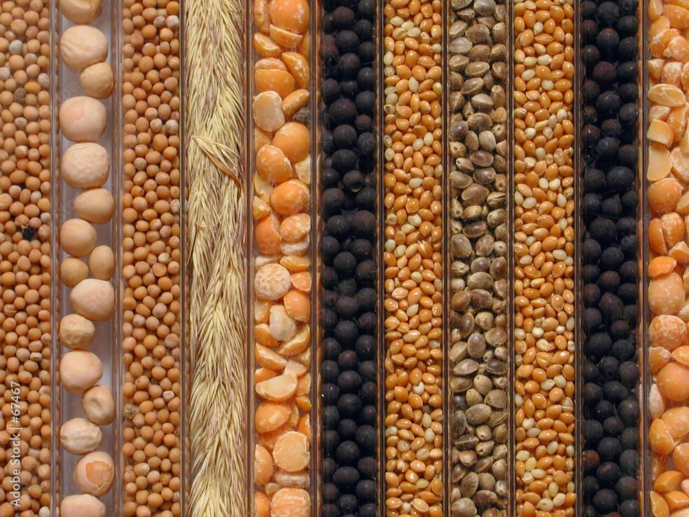wzór nasienie makro - powiększenie