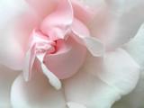 Fototapete Aroma - Schön - Blume