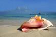 beach conch