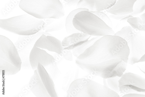 white rose petals on white