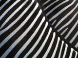 details of zebra - 72685