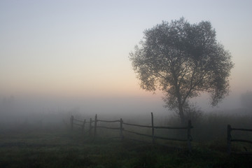 morning in the fog