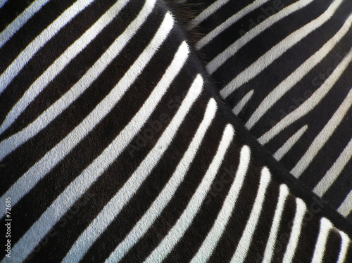 Fotobehang Zebra details of zebra