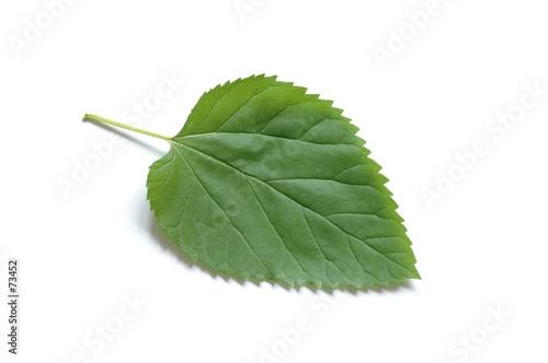 poster of leaf