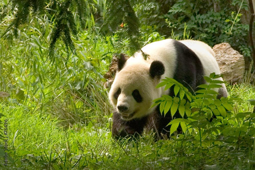 azja azjatycki bambus - powiększenie