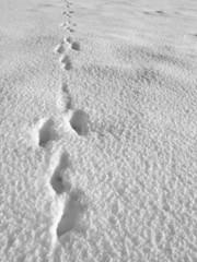 hare footprint