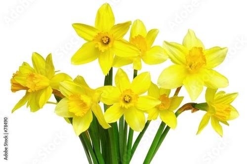 Foto op Aluminium Narcis daffodils