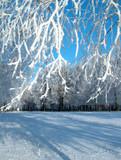 winter hoar-frost. poster