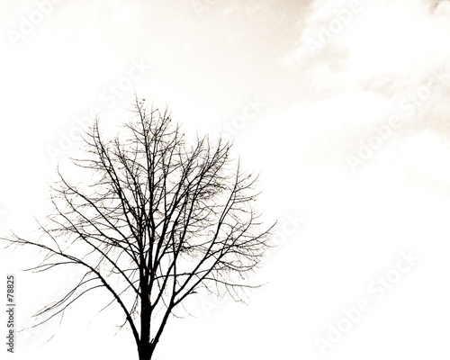 tree - 78825