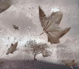 sous la pluie 8