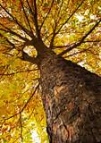 surface of chestnut  bark poster