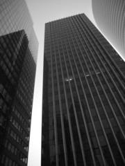 buildings en nuance de gris