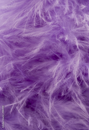 purple feather abstract background