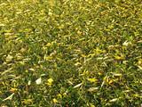 autumn lawn poster