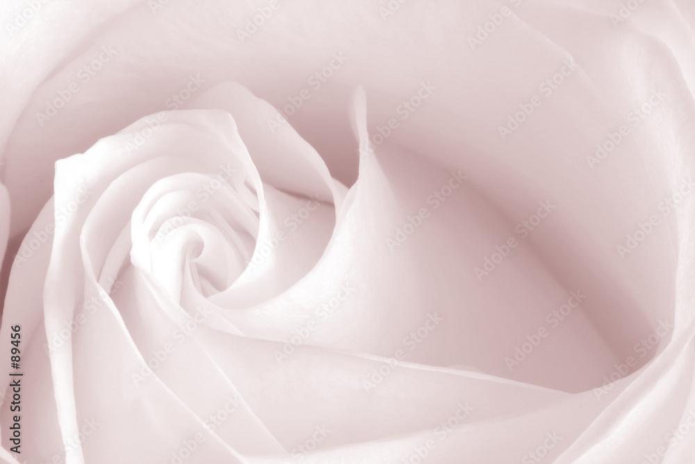 kwiat kwiatowy botanika - powiększenie