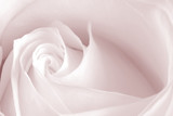 pink rose - 89456