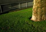 herbe et bitume poster