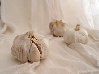 garlic on gauze (2)