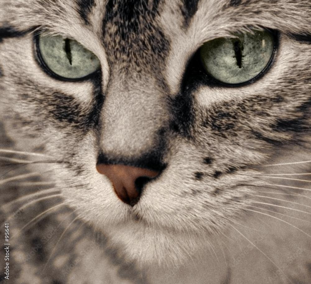 Kocie spojrzenie - powiększenie