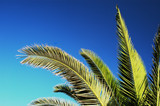 palm tree branches poster