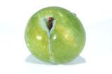 green plum poster