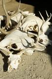 skulls poster